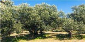 Gelibolu Kavaklı  Köyü