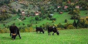 Azdavay Derelitekke Köyü