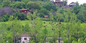 Azdavay Kırmacı Köyü