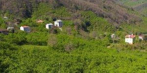 Keşap Gürpınar Köyü