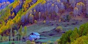 Şebinkarahisar Asarcık Köyü