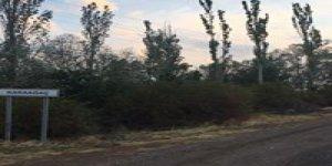 Şebinkarahisar Karaağaç Köyü