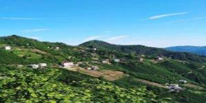 Tirebolu Kayalar Köyü