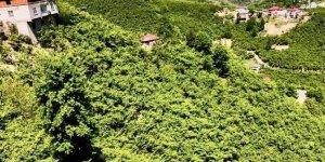 Tirebolu Mursal Köyü