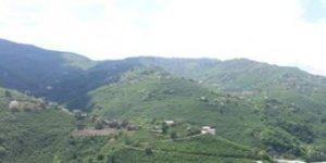 Tirebolu Sekü Köyü