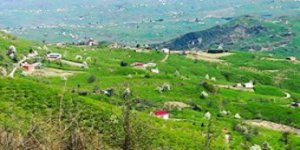 Tirebolu Yeşilpınar Köyü