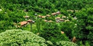 Çatalzeytin Karacakaya Köyü