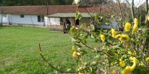 Gümüşova Yeşilyayla Köyü