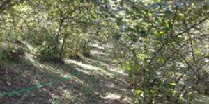 Kaynaşlı Yeşiltepe Köyü