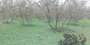 Düzce Develi Köyü