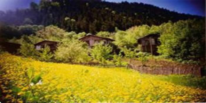 Düzce Kozluk Köyü