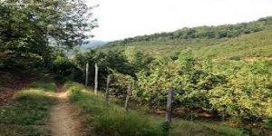 Düzce Yeşilçam Köyü