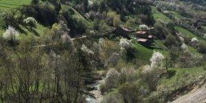 İhsangazi Sarıpınar Köyü