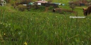 Karakoçan Durmuşköy Köyü
