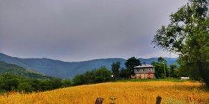 Şenpazar Büyükmutlu Köyü