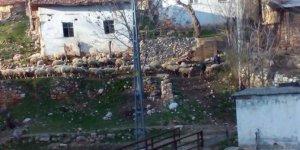 Kastamonu Alçıcılar Köyü