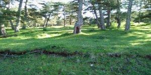 Kastamonu Gelinören Köyü
