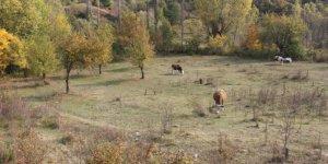 Kastamonu Kıyık Köyü