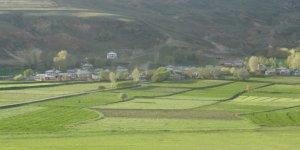 Çayırlı Sarıgüney Köyü