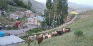 Tercan Köprübaşı Köyü