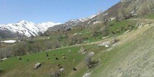 Tercan Yaylım Köyü