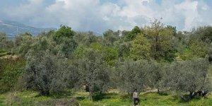 Yayladağı Turfanda Köyü