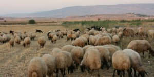 Pazarcık Maksutuşağı Köyü