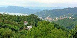 Perşembe Çınar Köyü