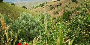 Zile Yenidağiçi Köyü
