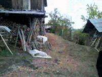 Kastamonu Akçakese Köyü