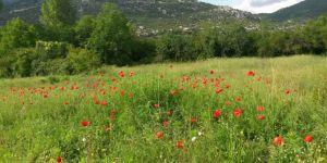 Antalya Manavgat Değirmenözü Köyü