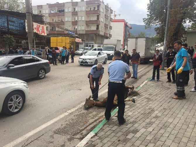 Bursa'da Açlıktan Yere Yığılan Ata Operasyon