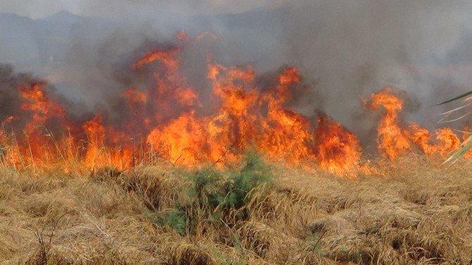 Edremit'te Sazlık Yangını