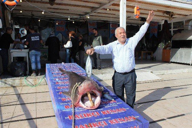 Köpekbalığı Kanser Hastalarına Şifa Olacak