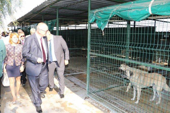 Başkan Ergün Akhisar'da Yapımı Süren Hayvan Barınağını İnceledi