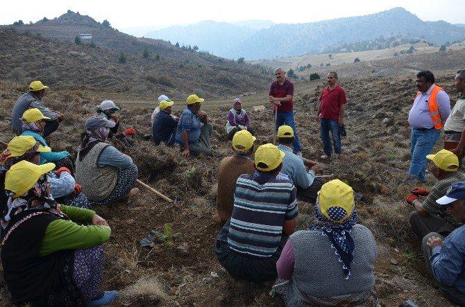 Mersin'de Ağaçlandırma Çalışmalarında Hedefler Aşıldı