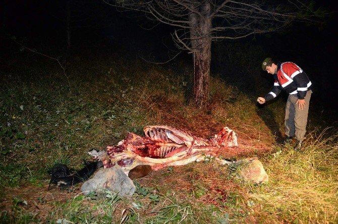 Uludağ'da At Kesenlere Şok Operasyon
