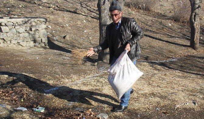 Osmancık'ta Kuşlar İçin Yem Bırakıldı