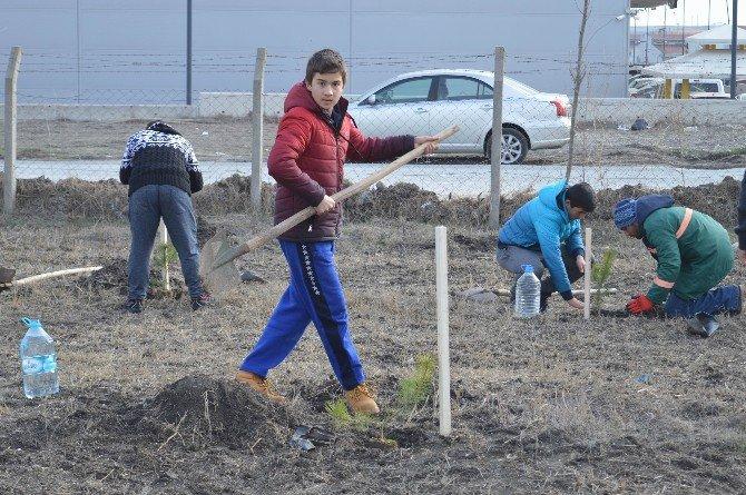 Öğrenciler 150 Karaçamı Toprakla Buluşturdu