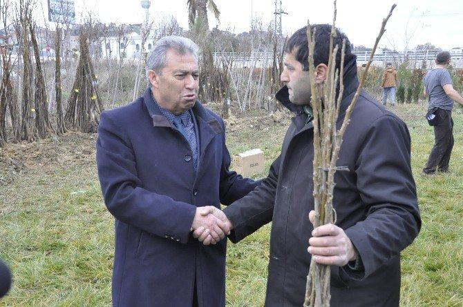 Sinoplu Çiftçilere 10 Bin Adet Ceviz Fidanı Dağıtıldı