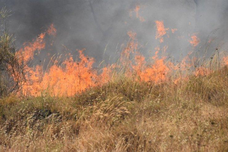 Sinop'ta örtü yangını
