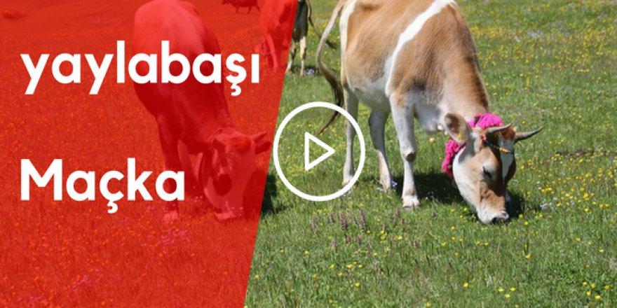 Maçka Yaylabaşı Köyü Video