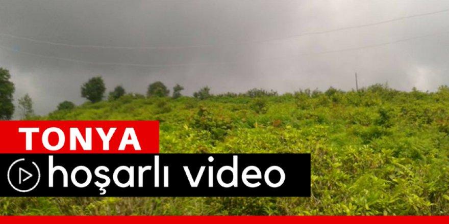 Tonya Hoşarlı Köyü Video