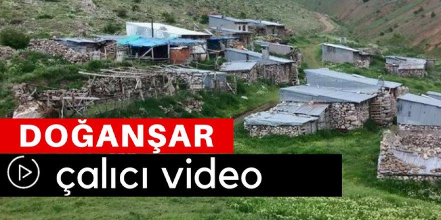 Doğanşar Çalıcı Köyü Video