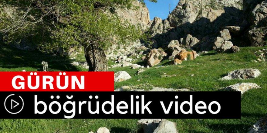 Gürün Böğrüdelik Köyü Video