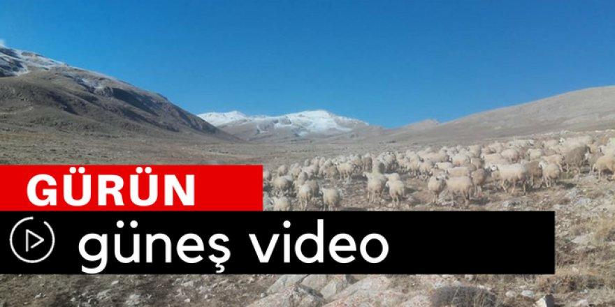 Gürün Güneş Köyü Video